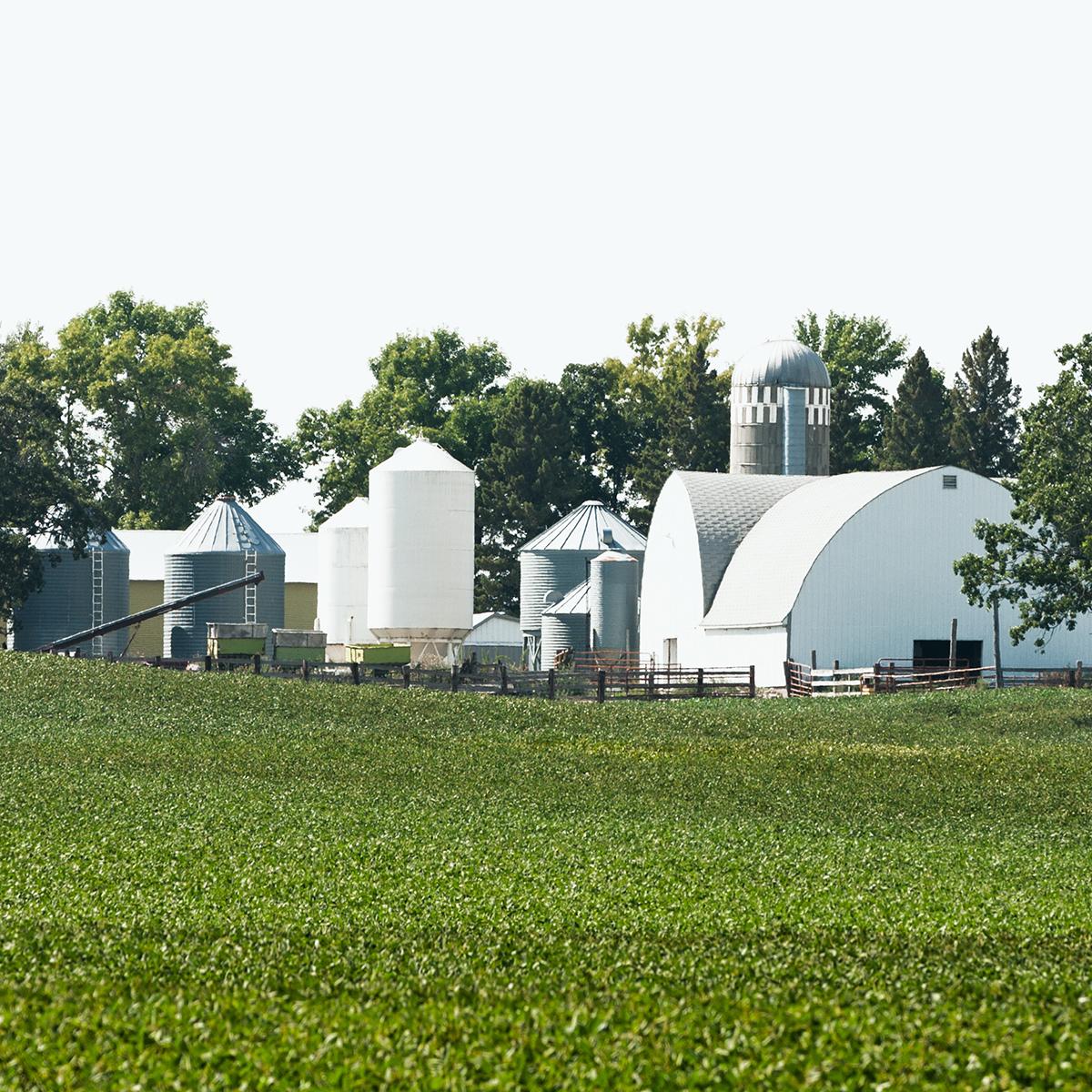 Farm and Soybean crop